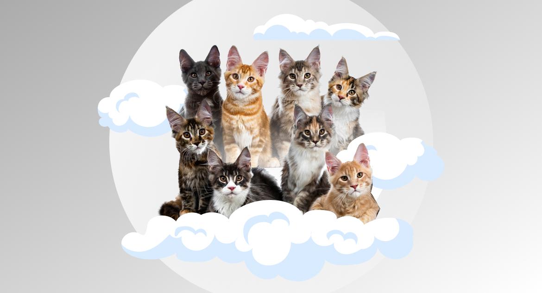 popular cloud programming languages
